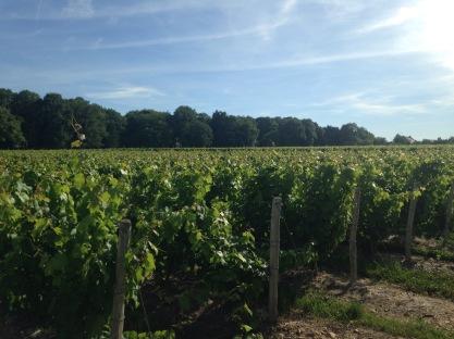 Tour du vin: Loire