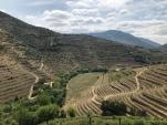 Steep vineyards