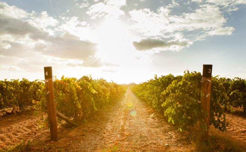#piccolaweinproben (4): Von Italien nach Australien – Die Weine von Calabria FamilyWines