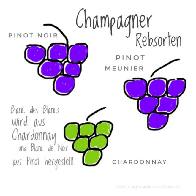 MeineAuslese_WeinFakt_Champagner-Rebsorten