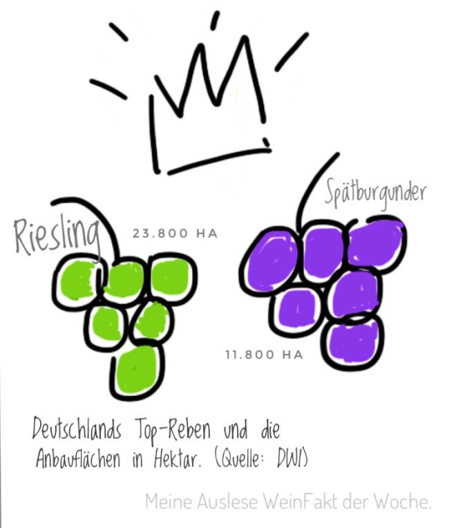 MeineAuslese_WeinFakt_Deutsche-Topreben