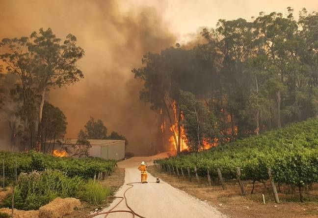 bushfire_koala_firefighter_winery